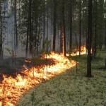Лесной пожар в Донецке