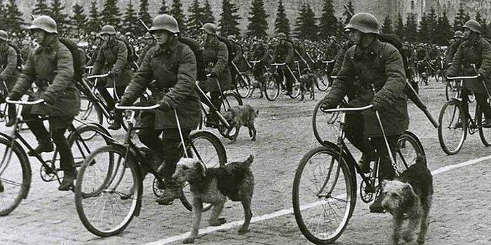 anti-tank-dog